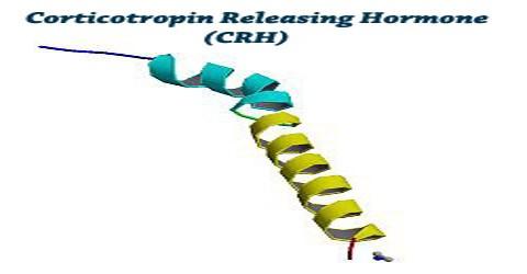 CRH: Corticotropin Releasing Hormone