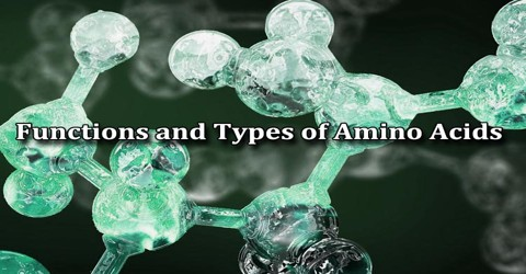 Functions and Types of Amino Acids