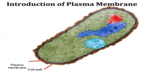 Introduction of Plasma Membrane