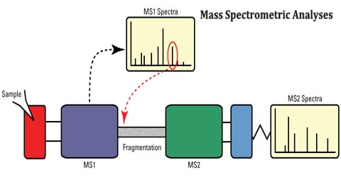 Mass Spectrometric Analyses