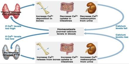 Mineral Bone Disorder