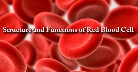 Structure and Functions of Red Blood Cell