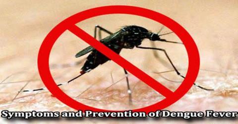 Symptoms and Prevention of Dengue Fever