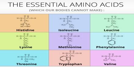 amino acid residues