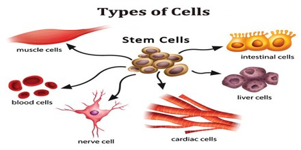 types of cells in human body and functions - assignment point, Human Body
