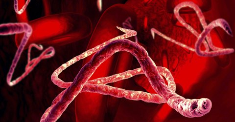 Bioterrorism Medicine