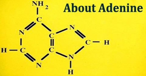 About Adenine