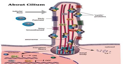 About Cilium