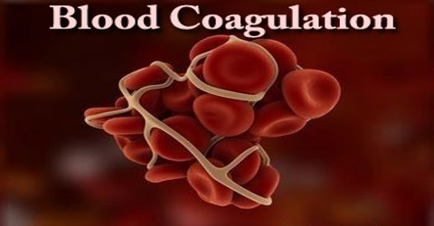 Blood Coagulation