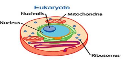 comparison of prokaryotic and eukaryotic cells essay