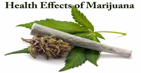 Health Effects of Marijuana