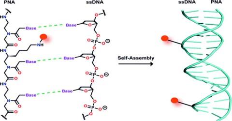 PNA: Peptide Nucleic Acid
