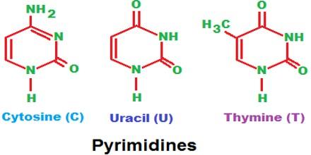 pyrimidine assignment point