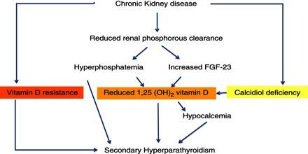 vitamin definition biology