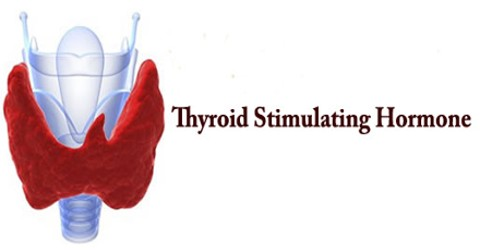 TSH: Thyroid Stimulating Hormone