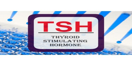 growth and thyroid hormone paper The thyroid keeps your metabolism under control through the action of thyroid hormone abnormal thyroid growth nodules or lumps within the thyroid.