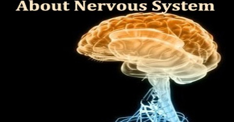 About Nervous System