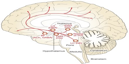 neuroanatomy of and neural processes of The functional neuroanatomy of comprehension and memory: the importance of prior knowledge  in a process establishing coherence  the specific neural correlates .