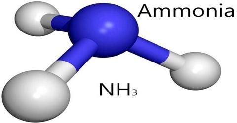 About Ammonia