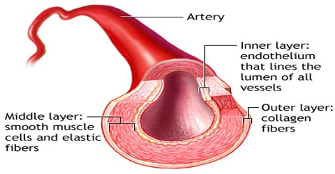 About Artery
