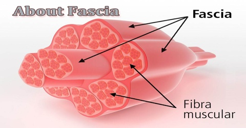 About Fascia