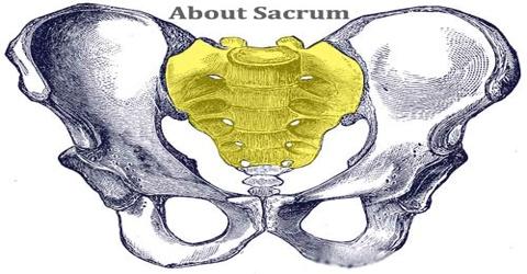 About Sacrum
