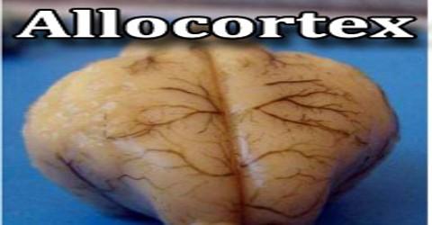 Allocortex