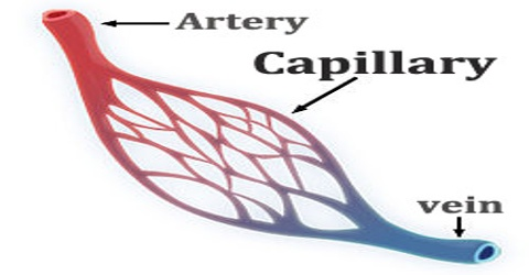Capillary