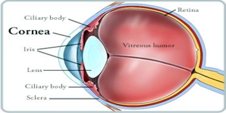 About Cornea Assignment Point