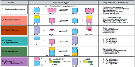 enzyme nomenclature and classification pdf