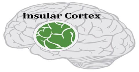 Insular Cortex