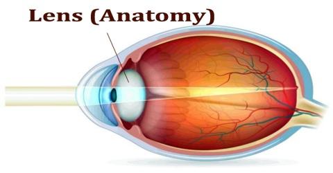 Lens (Anatomy)