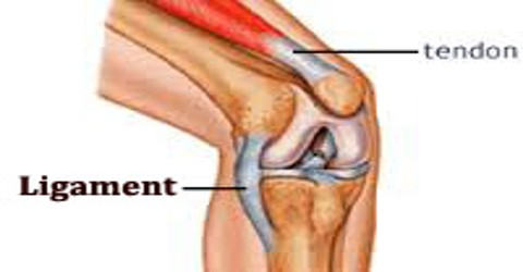 Ligament Assignment Point