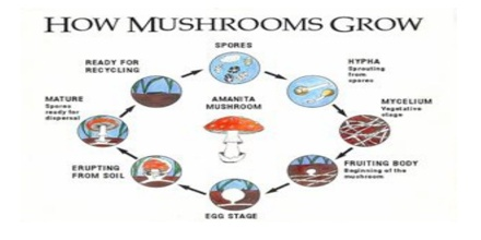 Prospects of Mushroom in Bangladesh - Assignment Point