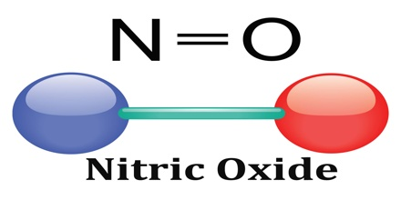 Nitric Oxide What is It Does it Really Work