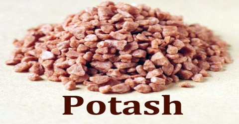 Potash - Assignment Point