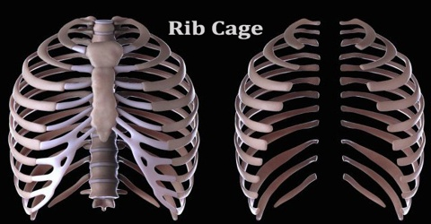 Rib Cage Assignment Point