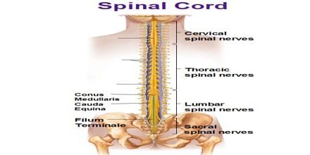 Spinal Tap Albums