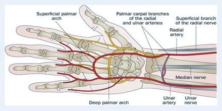 Ulnar Artery - Assignment Point