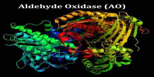 Aldehyde Oxidase