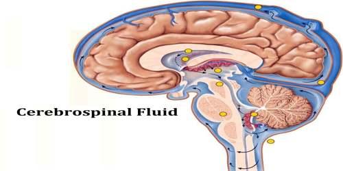 Cerebrospinal Fluid
