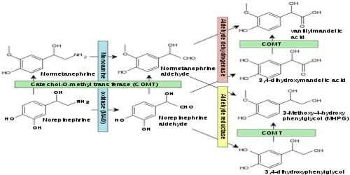 monoamine oxidase assignment point
