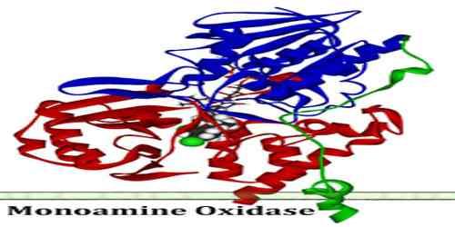 Monoamine Oxidase
