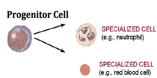 specialized cell