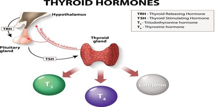 Thyroid Hormones Assignment Point