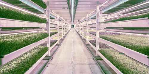 Vertical Farming Process