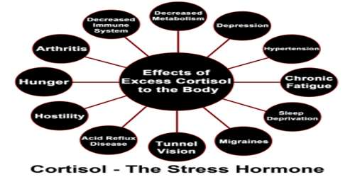 The importance of cortisol essay