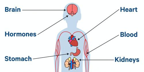 Effects of Lead on Human Body