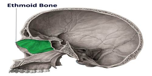 Ethmoid Bone Assignment Point
