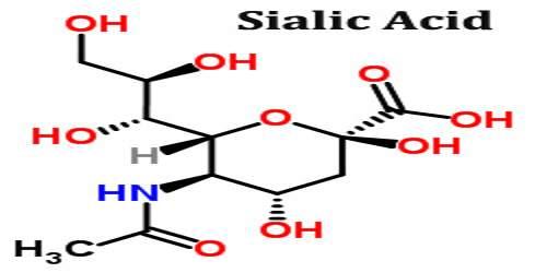 Sialic Acid